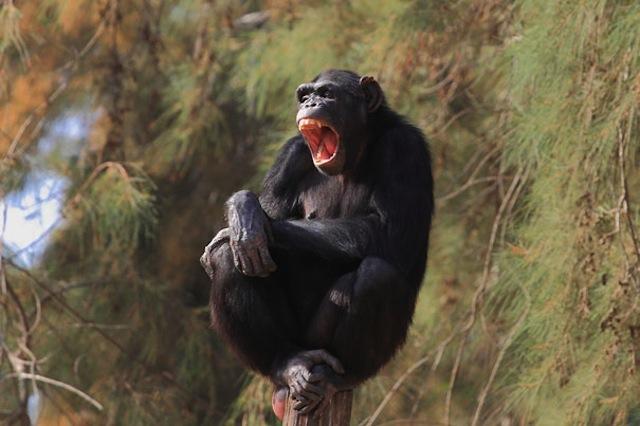 yawning18