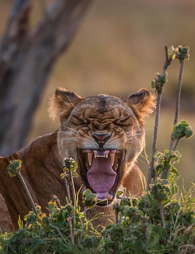 yawning25