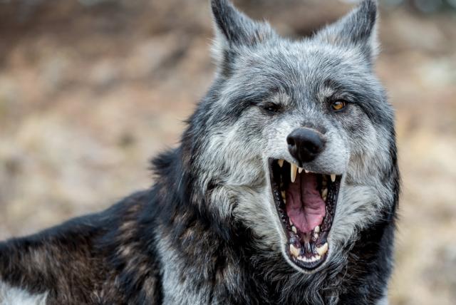 yawning28-640x428