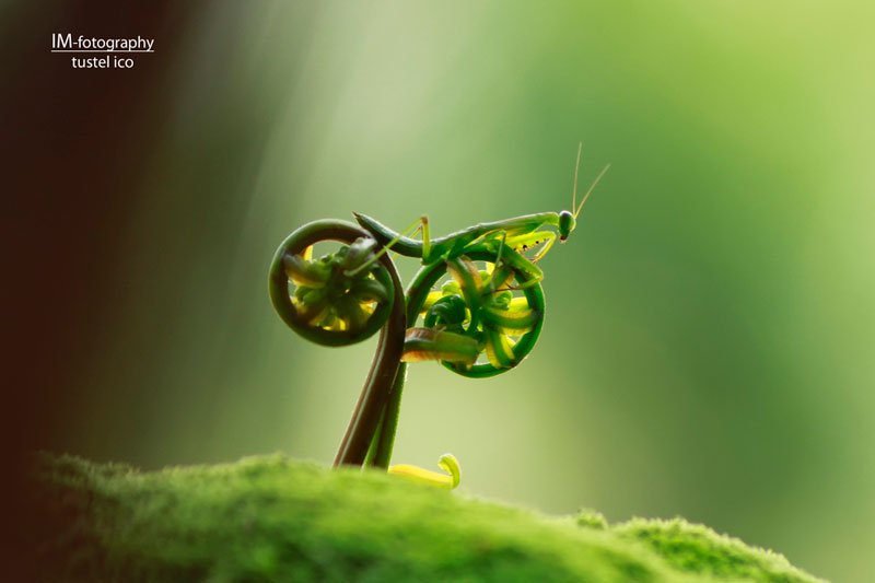 praying-mantis-bike