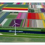 オランダの美しすぎるチューリップ畑の空中ツアー