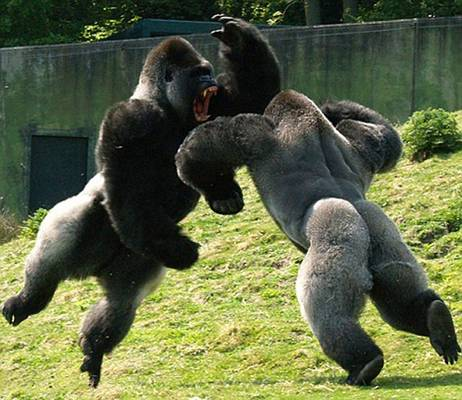動物同士の戦い 熱いファイト画像!!26枚