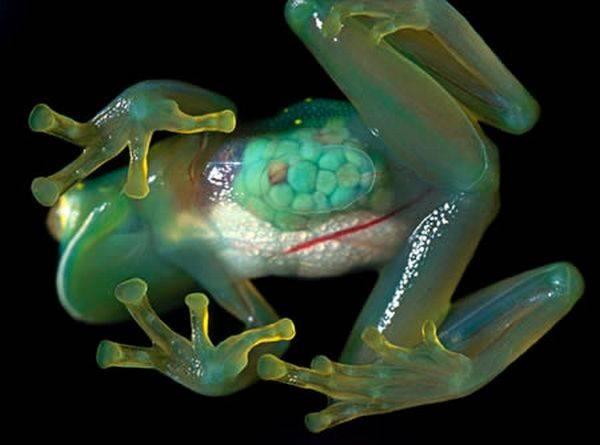 美しすぎる透明な生物の画像 20選|自然は魅力的で、しばしば奇妙です