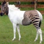 ハイブリッド動物には驚きを隠せません!交雑種・混血種・混血動物の画像20枚