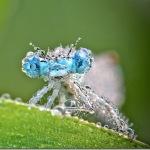 美しすぎるクリスタル昆虫