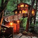 ツリーハウス!木の上の家の画像 40枚