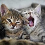 あくびをする動物たちがカワイイ!