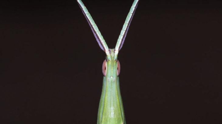 【肉眼では見れない虫のドアップ】超拡大された虫の写真 30選!!