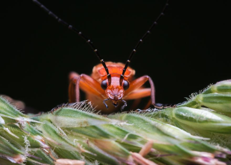 【肉眼では見れない虫のドアップ】超拡大された虫の写真