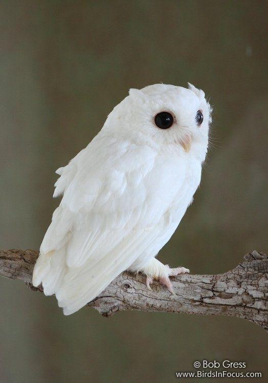 アルビノ(白い動物・昆虫)の画像