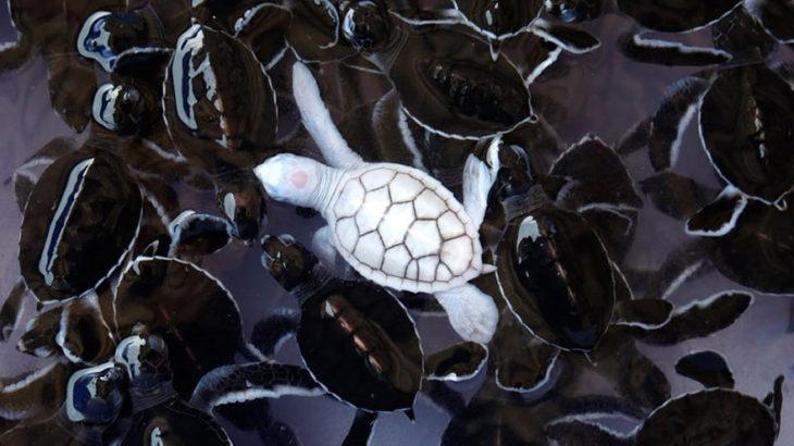 美しいアルビノ(白い動物・昆虫)の画像 28選!!