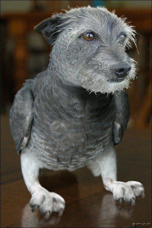 Photoshopで作成された素晴らしい動物のハイブリッド48選