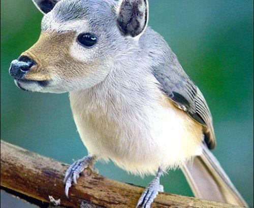 Photoshopで作成された素晴らしい動物のハイブリッド画像 48選