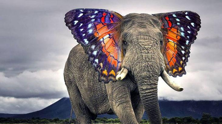 Photoshopで作成された素晴らしい動物のハイブリッド画像 41選