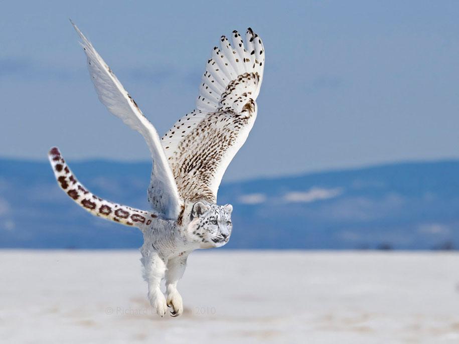 Photoshopで作成された素晴らしい動物のハイブリッド41選